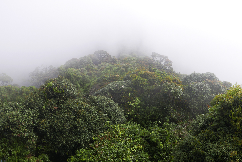 View from the Gunung Brinchang peak, Cameron Highlands (photo by Irina Stelea)