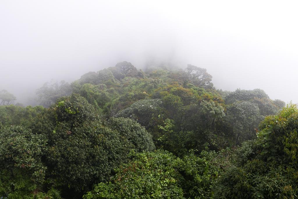 View from the Gunung Brinchang peak, Cameron Highlands (photo by Irina Stelea)