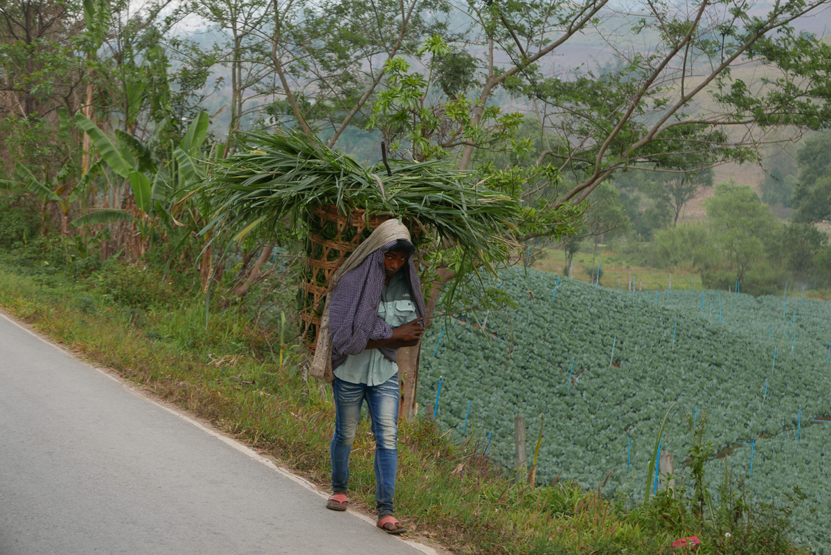 Man carrying a crop basket on the road to Umphang aka Death Highway, Northern Thailand (photo by Irina Stelea)